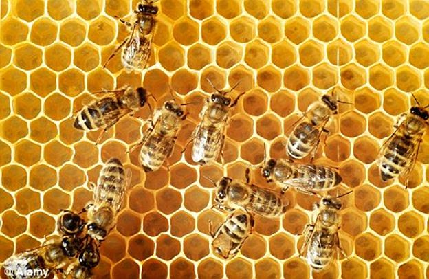Picada de abelha é afrodisiaco?