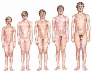 tamanho do pênis relacionado a altura