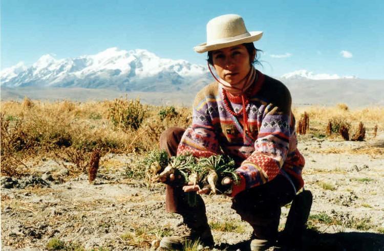 Conheça os benefícios da Maca Peruana para você